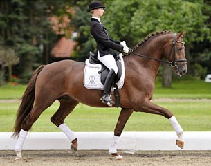 Schockemohle Cleaning Up Stallion Roster For 2017