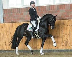 Stallion at Stud: Tolegro