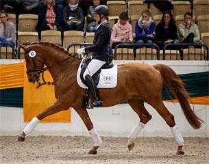 Tudor, Top Seller of the 2017 Trakehner Sport Horse Auction