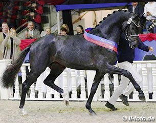 A attractive trio with black stud horse